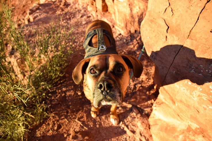 Cathedral Rock Cosmo